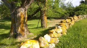 061116-yellow-lichen