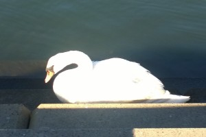 0615`6-swan-Providence