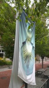 081616-RISD-Museum-banner