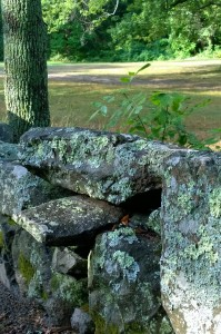 81116-lichen-stonewall-near-North-Bridge