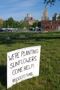 060816-plant-sunflowers-superman-bldg
