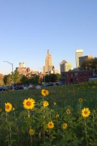 091316-sunflowers-providnece
