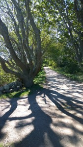 101016-dirt-road-new-shoreham