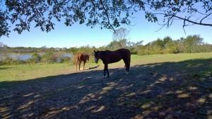 101016-horses-new-shoreham