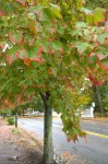 102216-leaves-tinged-with-pink