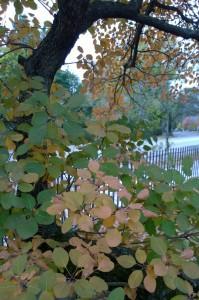 103016-graveyard-tree-concord