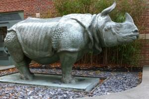 111716-mfa-museum-school-rhino