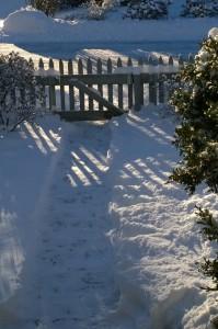 010817-sunlight-on-snowy-walk