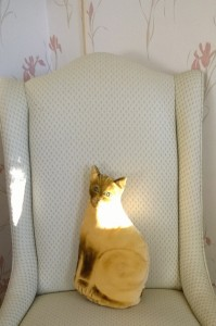 010817-sunlight-on-stuffed-cat