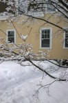 021217-tree-in-snow-Providence