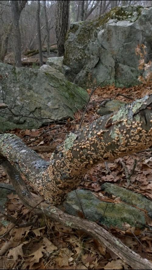 022517-fungus-rock-lichen-woods