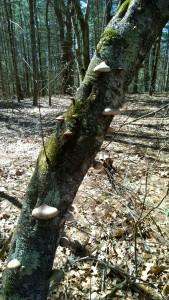 040917-Oct-Farm-fungus