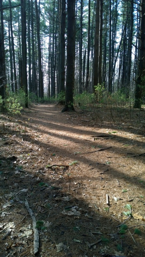 041217-shadows-stripe-forest-floor