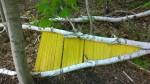 051617-fallen-birch-art