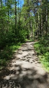 052917-woodland-shadows-stockholm
