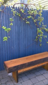 051817-bench-under-grape-arbor