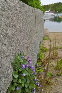 060217-flowers-beside-harbor-in-Sweden