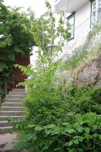 060317-hidden-staircase-Smogen