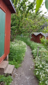 060417-Väderöarna-island-path
