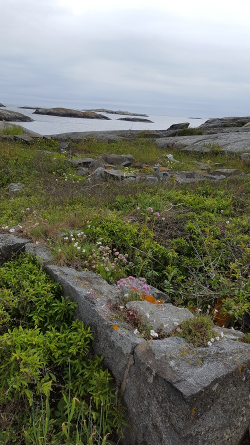 060417-Väderöarna-view-with-flowers