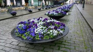 060617-purple-flowers-Oslo