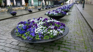 060617-purple-flowers-Oslo