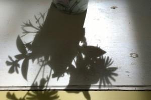051917-backdoor-dogwood-shadows