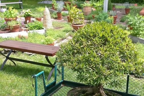 060917-bonsai-and-herb-garden