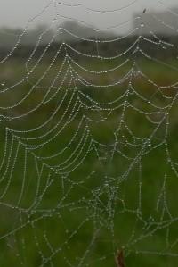 061717-spider-web