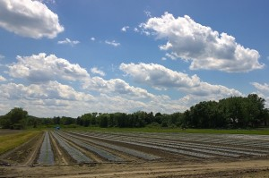 062117-clouds-over-plowed-field