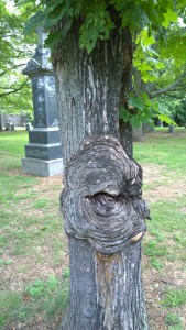 072217-frowning-tree