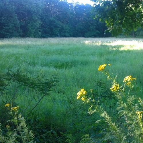 072517-golden-sunlight-6tag