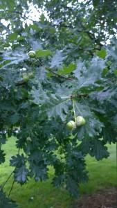 080817-acorns-Blackstone-Blvd-RI