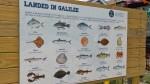 082517-fish-sign-Pt-Judith-RI