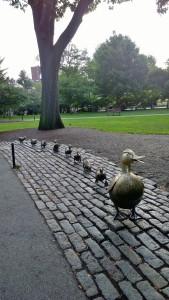 082517-Mrs-Mallard-Boston