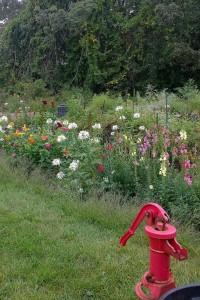 091617-Concord-community-garden