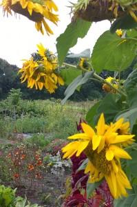 091617-September-garden