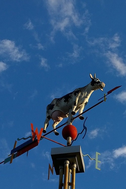 100617-Davis-Sq-cow-in-sky