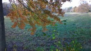110417-French's-Meadow-Sudbury-R