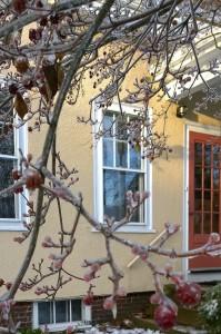 122417-when-ice-in-the-dooryard-bloomed