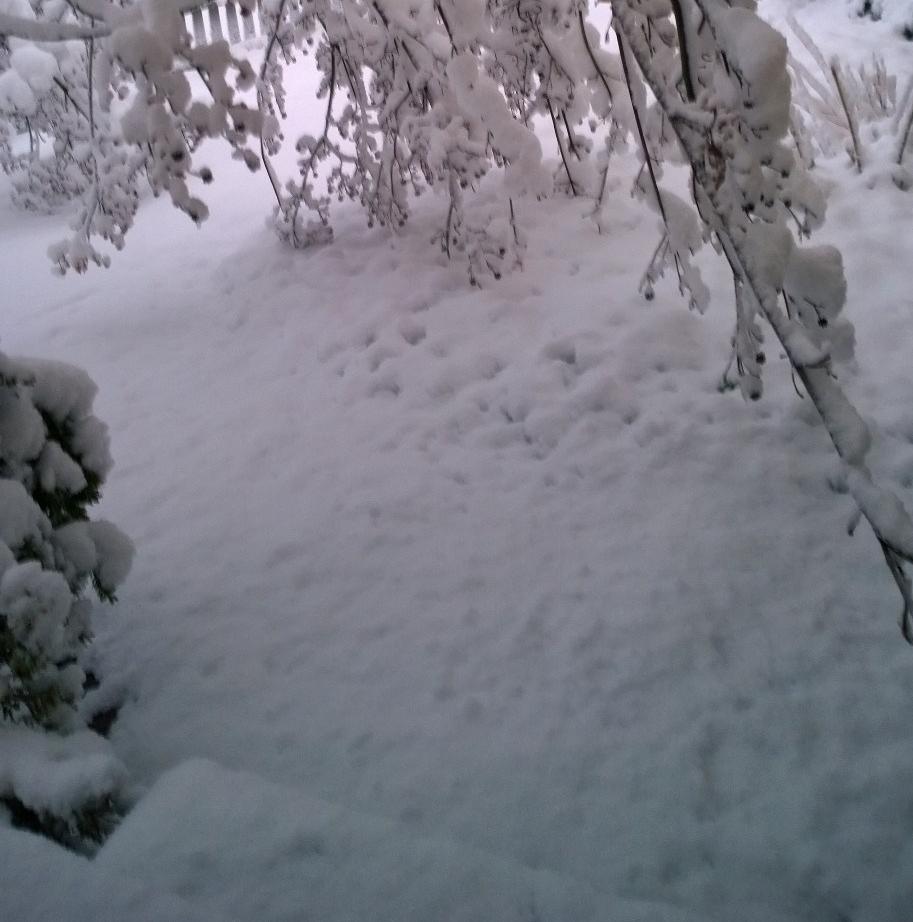 030818-bent-dogwood-at-backdoor
