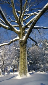 031418-lichen-and-snowy-branches