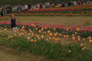 050618-running-in-tulips