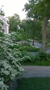 053018-dogwood-from-window