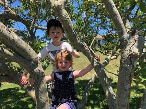 070818-tree-climbing-Rhode-Island