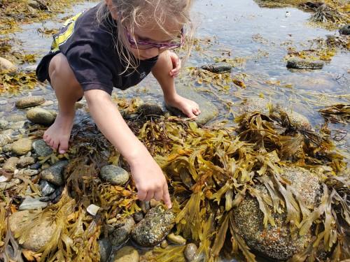 071118-seaweed
