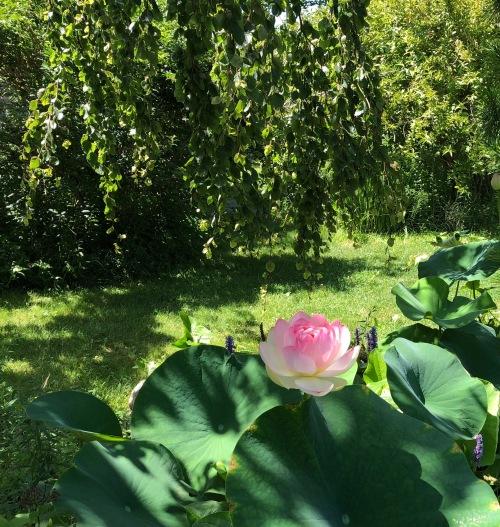 080318-lotus-Lakeside-Dr