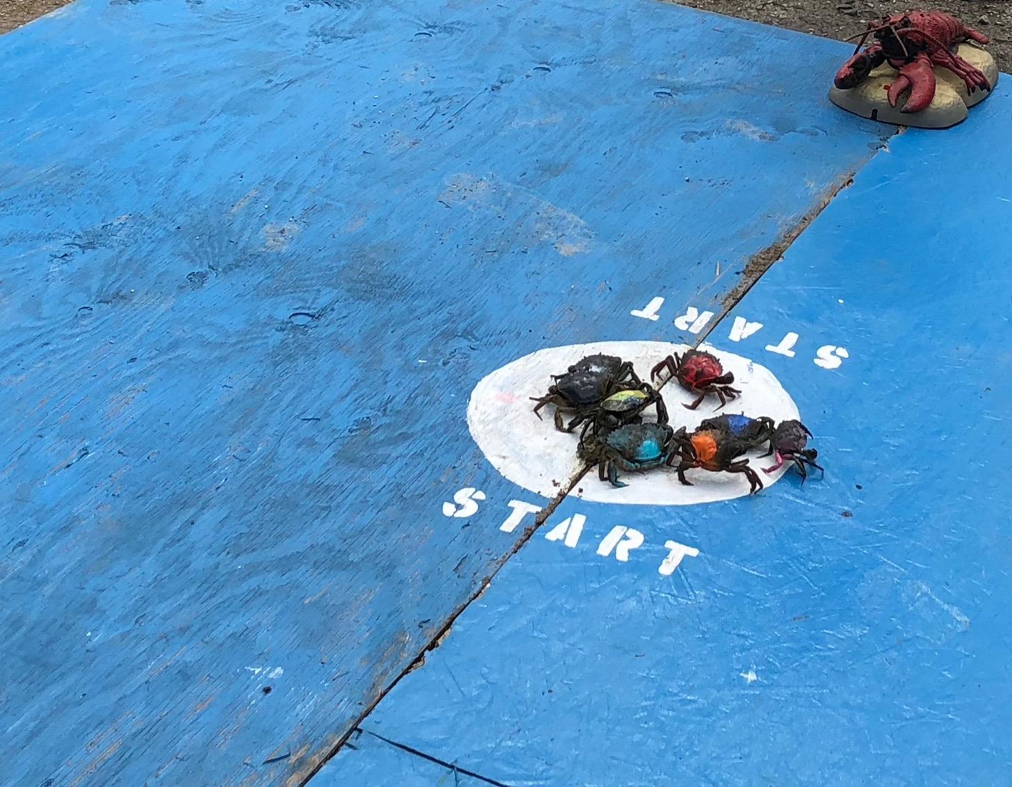 081218-.bucket-lifted-off-crabs