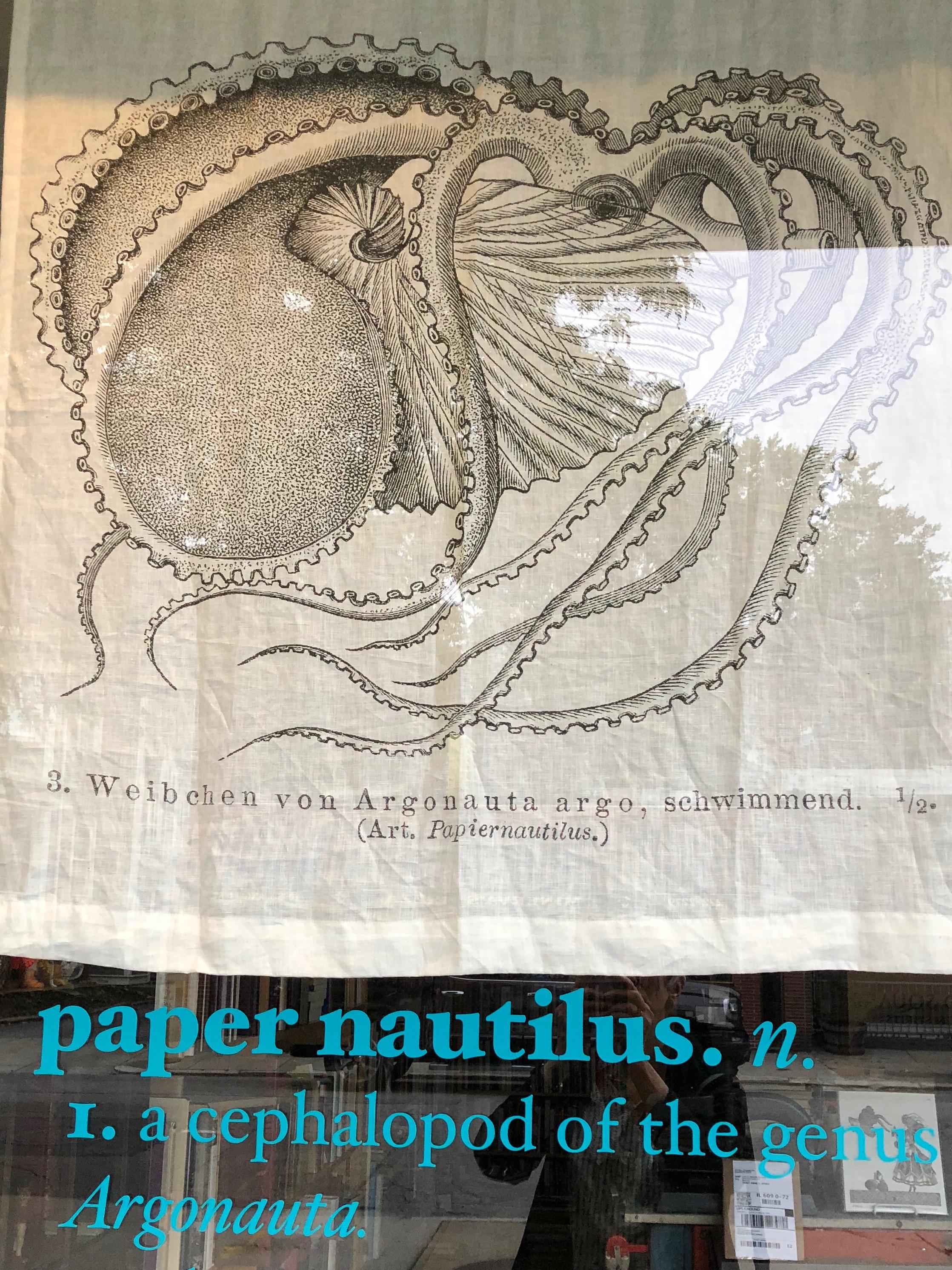 082018-Paper-Nautilus