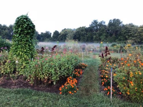 090418-mist-over-community-garden